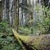 Fallen Tree In Lush Forest