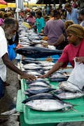 Honiara is the catch of the day