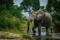 Republic of Congo is forest elephants