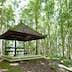 Empty pagoda in Casuarina forest, Kebun Raya Eya Karya Botanical Gardens, Candikuning, Bali, Indonesia