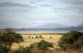 Lake Manyara National Park null