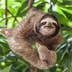 The sloth on the tree; Shutterstock ID 624132143; Your name (First / Last): Alicia Johnson; GL account no.: 65050; Netsuite department name: Online Editorial ; Full Product or Project name including edition: Panama