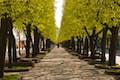 Kaunas is a stroll along a tree-lined avenue