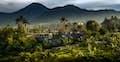 Lovina is green hills fringing a sprawling city