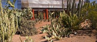Desert Botanical Garden Greater Phoenix Usa Attractions Lonely Planet