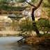 Biwon Garden at Changdeokgung, Gwanghwamun.