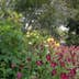 Garden profusion with path
