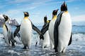 Antarctica is a land of fabled creatures