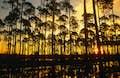 Florida Panhandle null