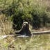 A brown bear cools off in a pool at the bear sanctuary near the Badovc lake on August 19, 2015 in Badovc, during a heat wave in Kosovo. AFP PHOTO/ARMEND NIMANI        (Photo credit should read ARMEND NIMANI/AFP/Getty Images)