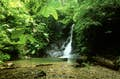 Ulu Temburong National Park null