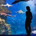 Magic undersea world