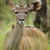 Gaborone Game Reserve