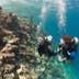 underwater buddy team reef