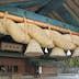 Japan, Sanin Region, Shimane Prefecture, Izumo, Shimenawa at Izumo Taisha Shrine. (Photo by: JTB Photo/UIG via Getty Images)