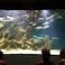 (GERMANY OUT) Frankreich, Cote de Beaute: Aquarium in La Rochelle (Photo by Rufenach/ullstein bild via Getty Images)