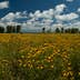 500px Photo ID: 123458731 - Northerly Island Wildflowers, Chicago