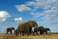 Botswana is where elephants tower