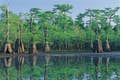 Apalachicola National Forest null