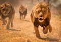 Zimbabwe is incredible wildlife encounters