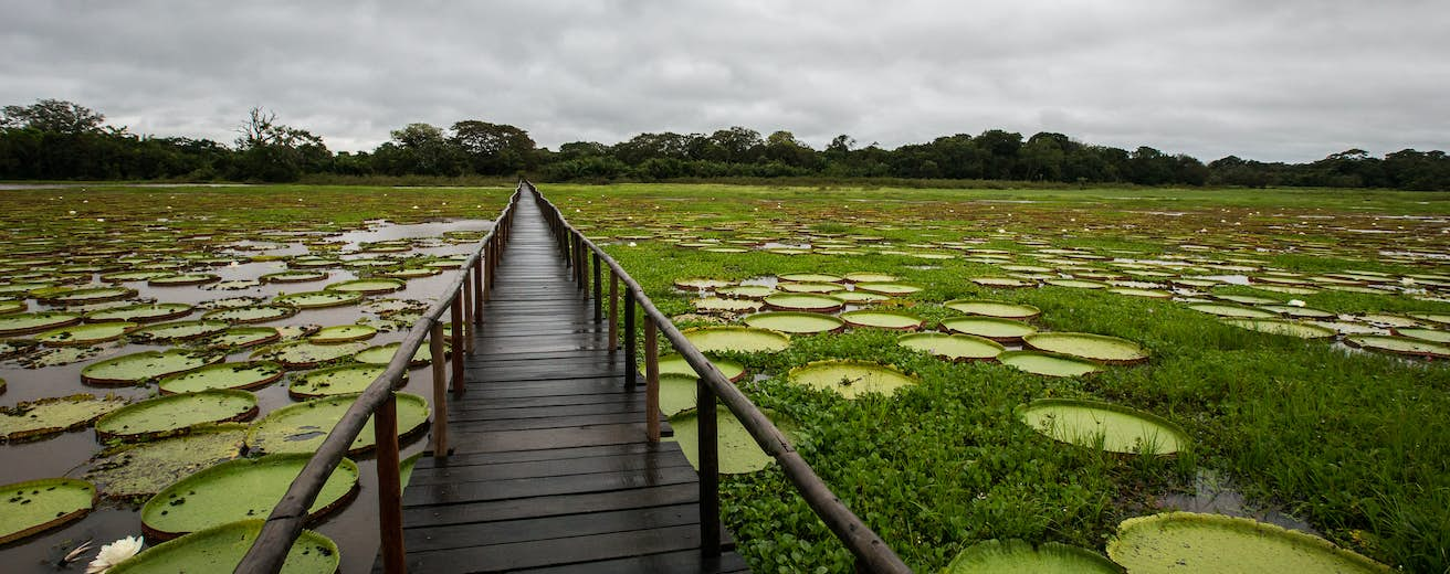The Pantanal travel | Brazil, South America - Lonely Planet