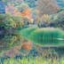 The Pond at Lost Maples State Natural Area; Shutterstock ID 166542374; Your name (First / Last): Emma Sparks; GL account no.: 65050; Netsuite department name: Online Editorial; Full Product or Project name including edition: Best_in_the_US_POIs