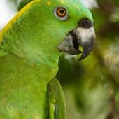 Echo Parrot Sanctuary