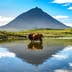 Mount Pico and a cow standing in water, reflected in a nearby lake; Shutterstock ID 378069745; Your name (First / Last): James Kay; GL account no.: 65050; Netsuite department name: Online Editorial; Full Product or Project name including edition: Azores destination page highlights