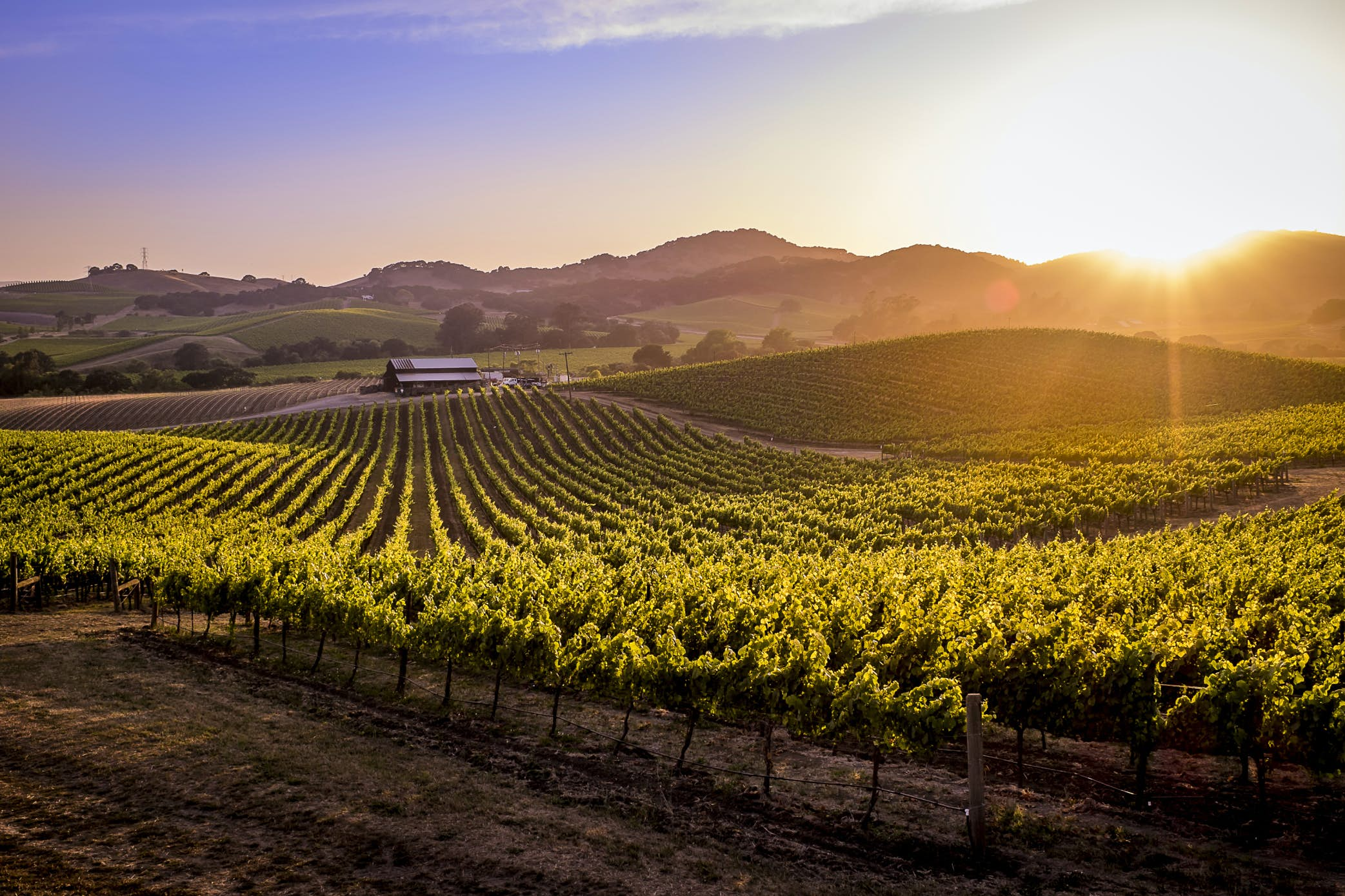 Napa and Sonoma Wine Country, California