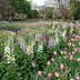 """DALLAS, March 23, 2017 -- People visit the flower show """"Dallas Blooms: Flower Power"""" at the Dallas Arboretum and Botanical Garden in Dallas, the United States, March 22, 2017. The flower show was held from Feb. 25 to April 9 under the theme """"Peace, love and flower power"""". (Xinhua/Zhang Yongxing via Getty Images)"""