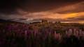 New Zealand is soft evening light