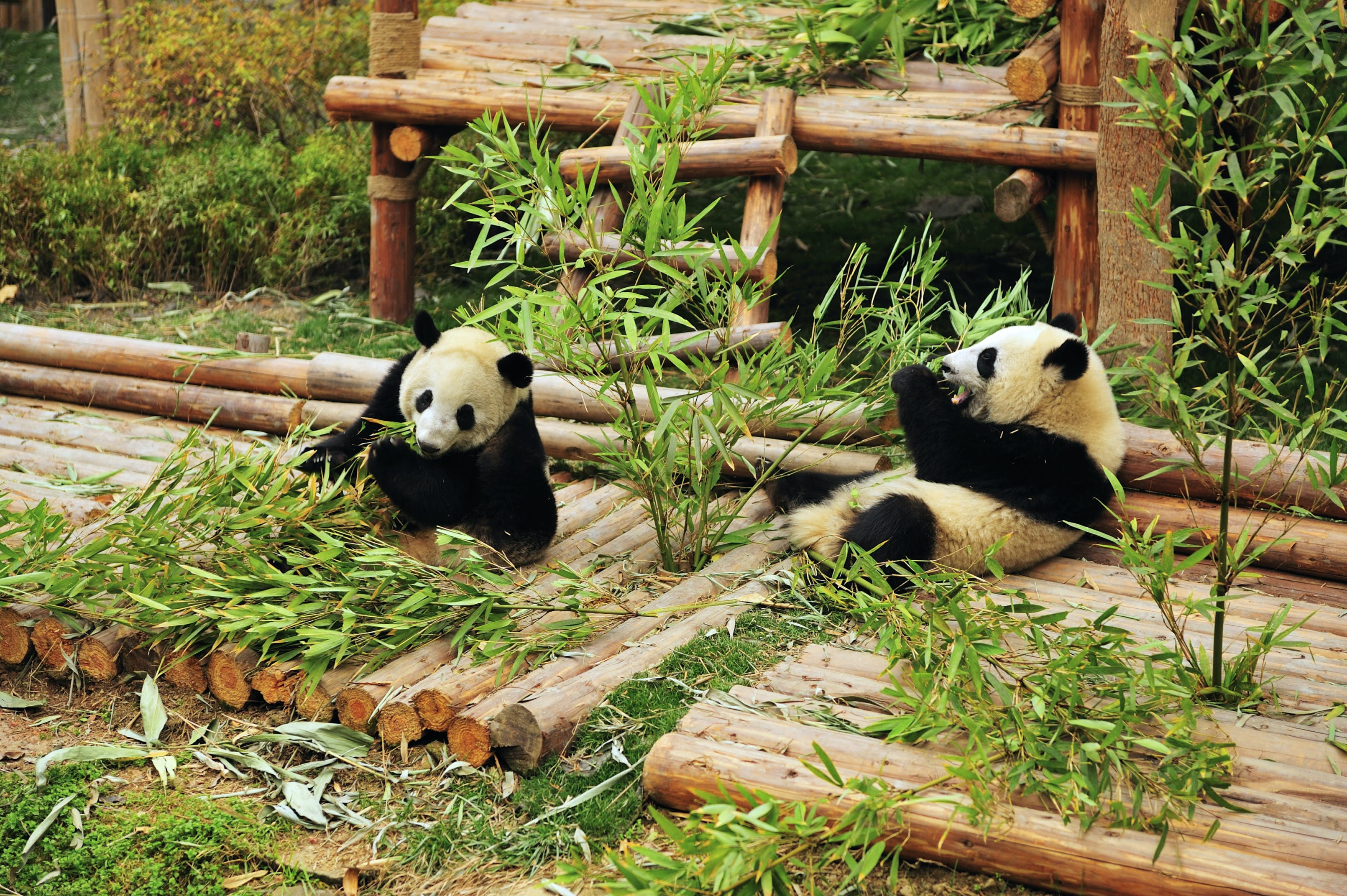 Must see attractions in Chengdu, China - Lonely Planet