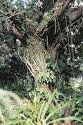Cane Garden Bay Area null