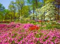 Southern USA is spring in bloom