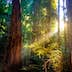 500px Photo ID: 113305553 - Mid summer photo from Muir Woods