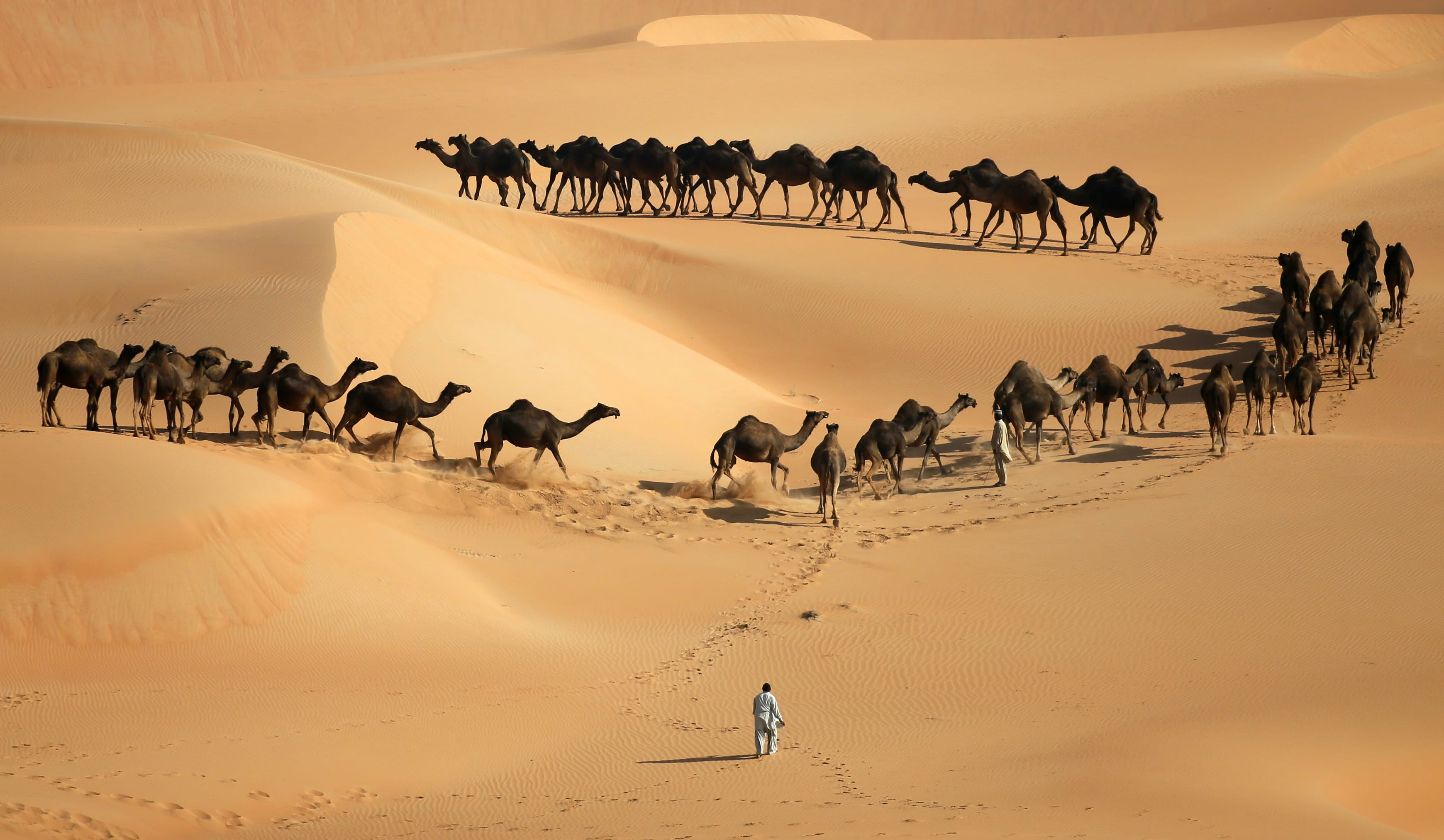 Liwa Oasis travel   United Arab Emirates, Middle East - Lonely Planet