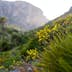 Yellow wild flowers at dawn in Sicily