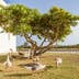 Frankincense tree at the Frankincense Museum with a group of geese under the tree. Salalah, Oman