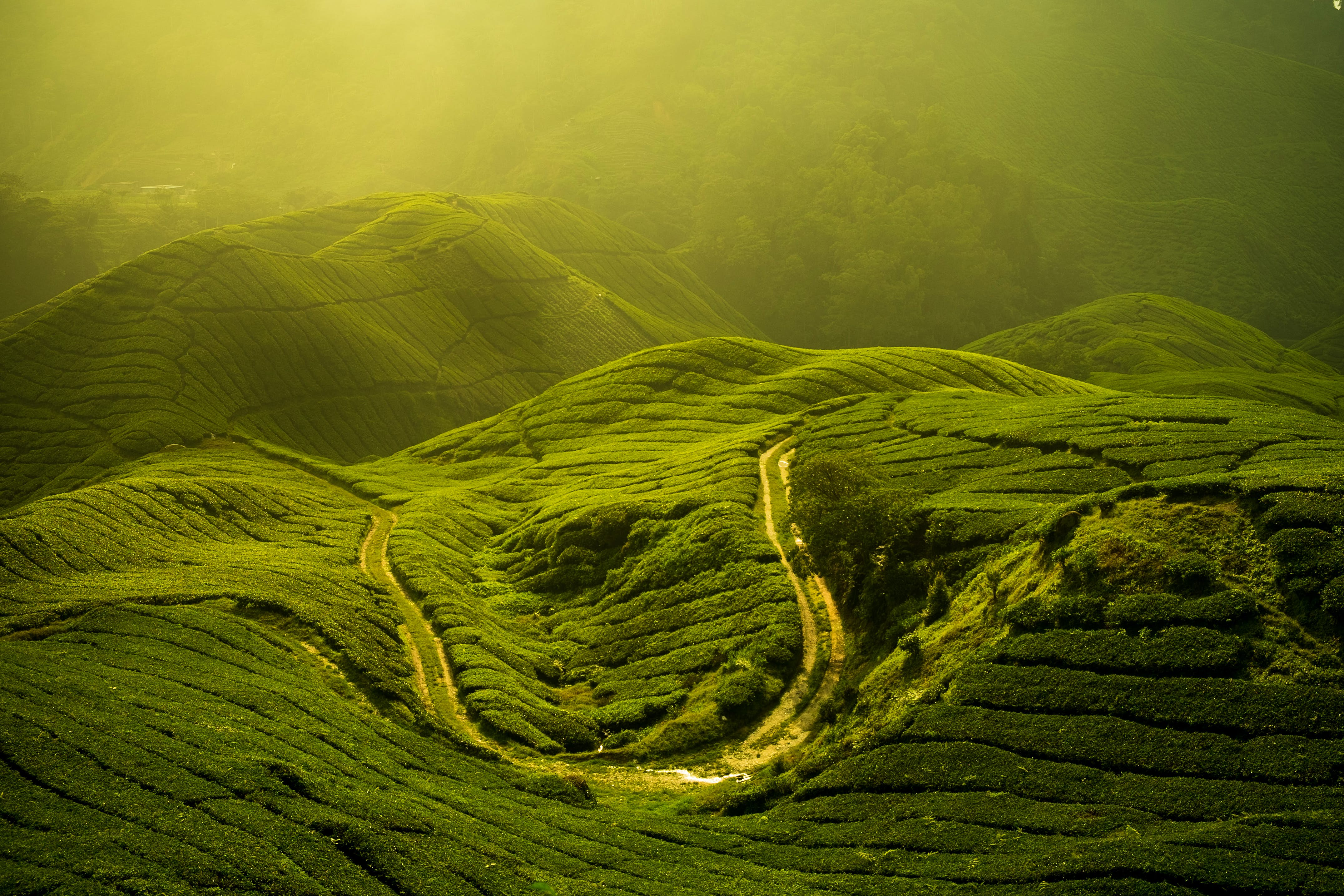 Cameron Highlands travel | Malaysia - Lonely Planet