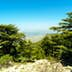 Cedars of Lebanon (Cedrus Libani) growing at 6,000 feet in the Shouf (or Chouf) Biosphere Reserve on Jabal Barouk in the Mount Lebanon district of Lebanon.; Shutterstock ID 797599933; Your name (First / Last): Lauren Keith; GL account no.: 65050; Netsuite department name: Online Editorial; Full Product or Project name including edition: Destination page image update