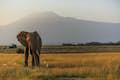 Mt Kilimanjaro National Park null