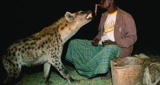 Northern Hyena Feeding Site