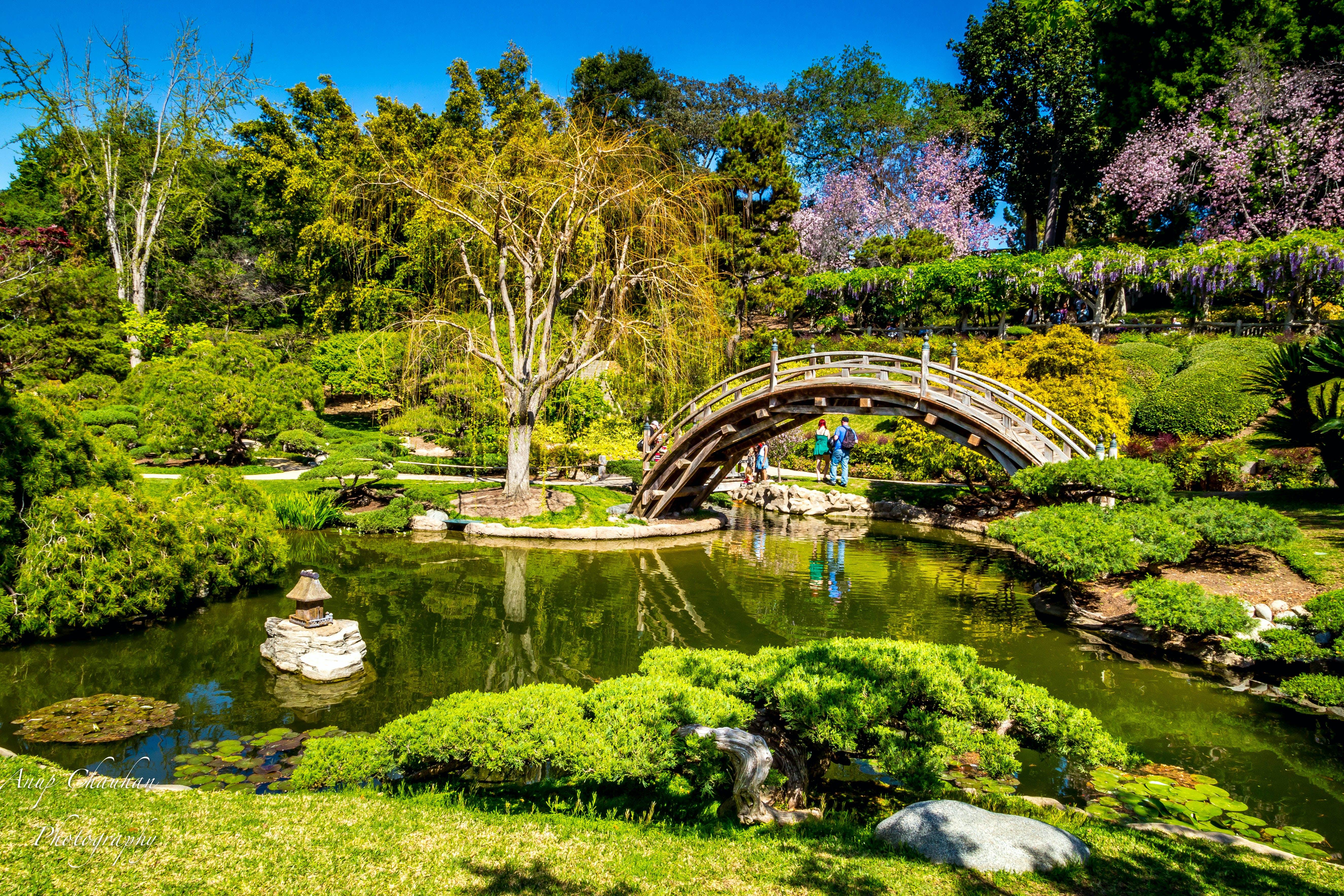 Huntington Library Art Collections Botanical Gardens Los