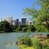 Still lake in Central Park