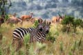 Rwanda is a safari surprise