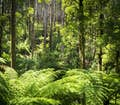 Victorian High Country is winding roads through lush fern trees