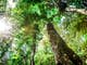 The Amazon travel | Brazil - Lonely Planet
