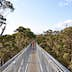 Denmark,WA,Australia-October 1, 2014: Bridge with tourists at the Tree Top Walk in the Valley of the Giants in Western Australia.