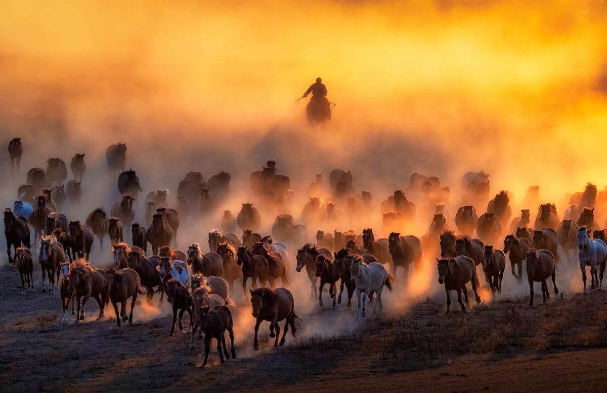sony national awards winners malaysia winner photographer mongolian plains sharp bird sunset galloping competition horse