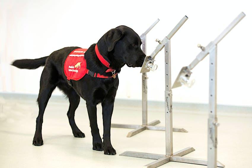 Medical dog training.jpg